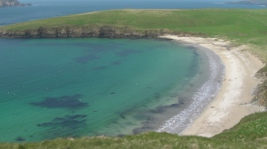 Enlarge the photo to see seals on the beach in Shetland